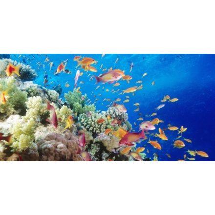 Naphalak, akvárium matrica