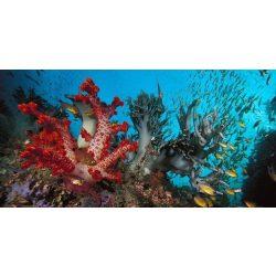 Vizibirodalom, akvárium matrica