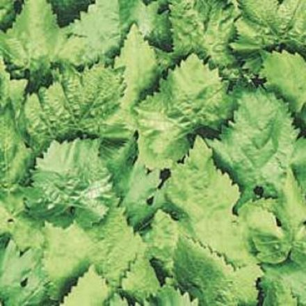 Levél mintás öntapadós tapéta a Dekoráció Webáruházban