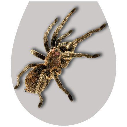 Pók, toalett díszítő matrica - Dekoráció Webáruház