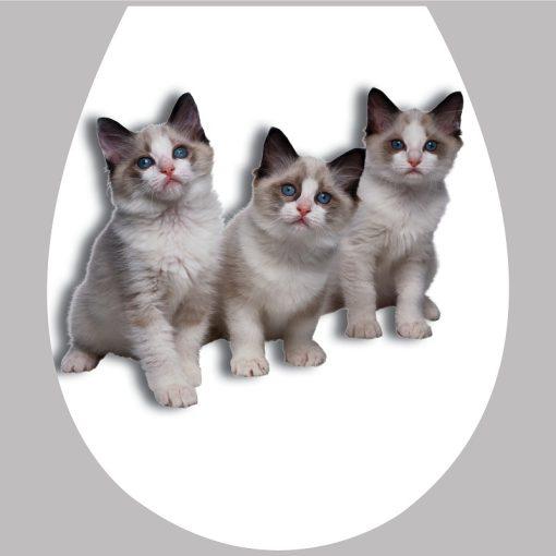 Cicák1, 3D toalett díszítő matrica - Dekoráció Webáruház