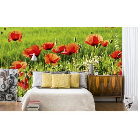 Pipacsok a mezőn, poszter tapéta 375*250 cm