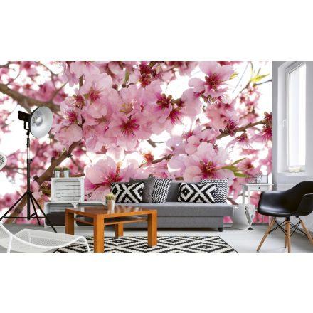 Cseresznyefa, poszter tapéta 375*250 cm