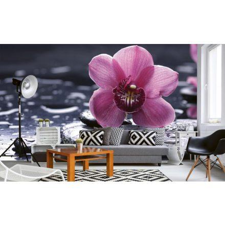 Orchidea lávaköveken, poszter tapéta 375*250 cm