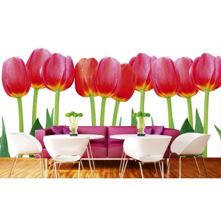 Tulipánszálak, poszter tapéta 375*250 cm