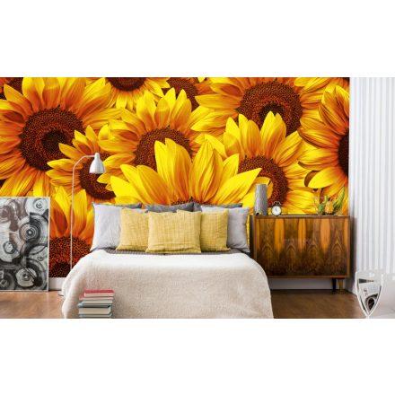 Napraforgó virágok, poszter tapéta 375*250 cm
