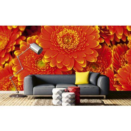 Narancssárga virágok, poszter tapéta 375*250 cm