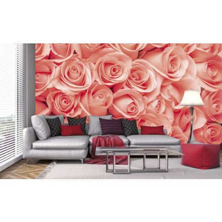 Rózsafejek, poszter tapéta 375*250 cm