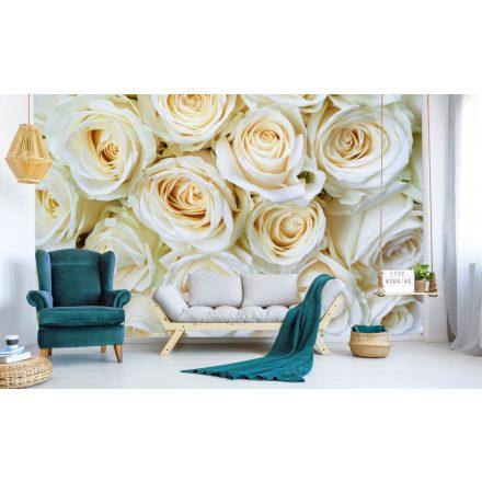 Fehér rózsafejek, poszter tapéta 375*250 cm