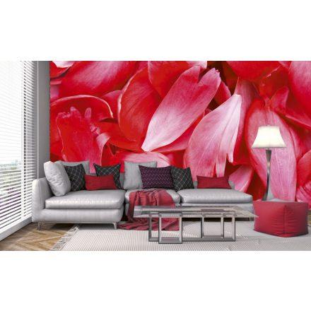 Virágszirmok, poszter tapéta 375*250 cm