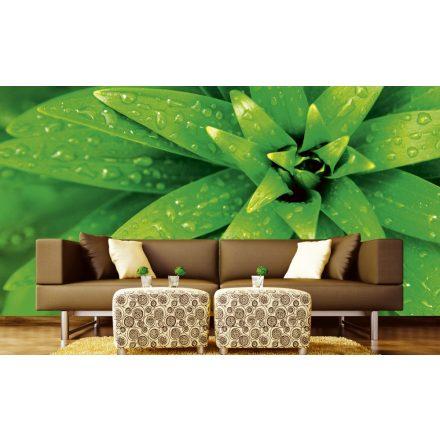 Vízes levelek, poszter tapéta 375*250 cm