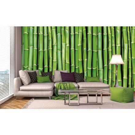 Zöld növény, poszter tapéta 375*250 cm