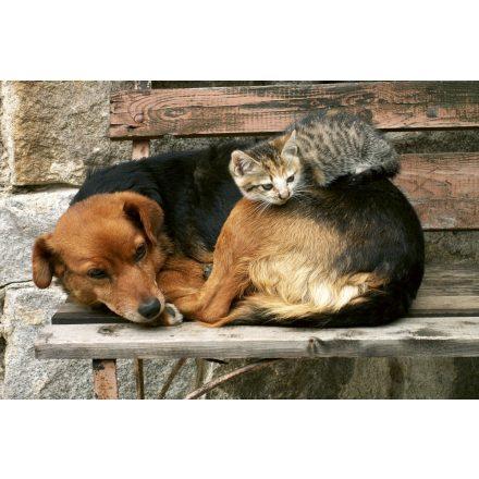 Kutya cica barátság, poszter tapéta 375*250 cm
