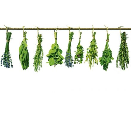 Lógó növények, poszter tapéta 375*250 cm