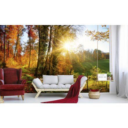Erdei panoráma ősszel, poszter tapéta 375*250 cm