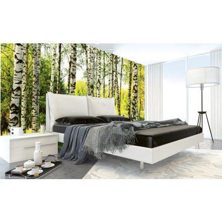 Nyírfa erdő, poszter tapéta 375*250 cm
