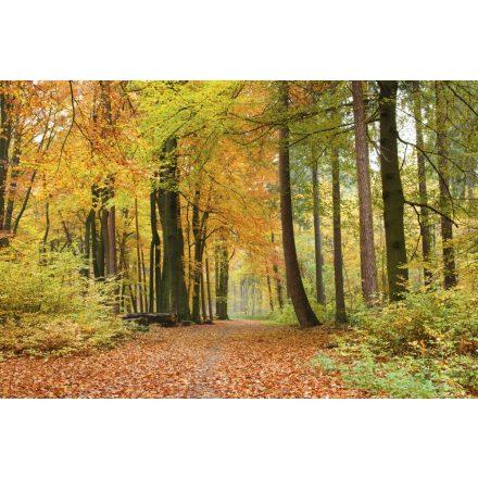 Őszi erdőben, poszter tapéta 375*250 cm