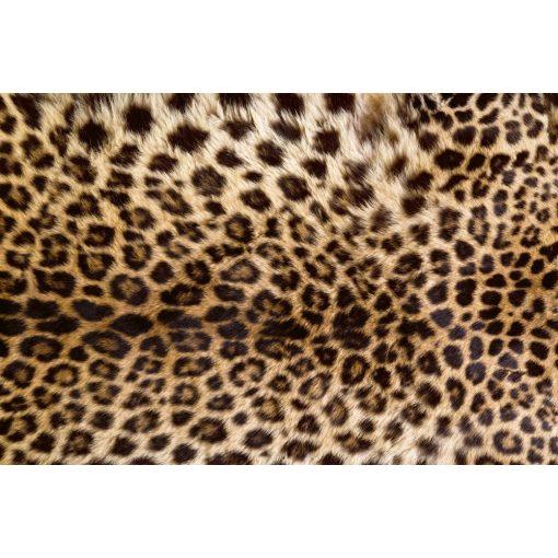 Leopárd, poszter tapéta 375*250 cm