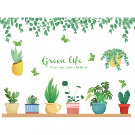 Növények gyülekezete