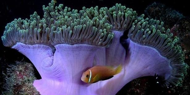 Élővilág, akvárium matrica 60Sz x 30M cm
