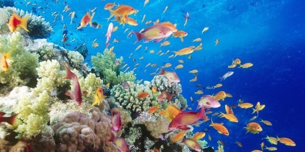Naphalak, akvárium matrica 60Sz x 30M cm