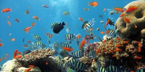 Vizivilág, akvárium matrica 60Sz x 30M cm