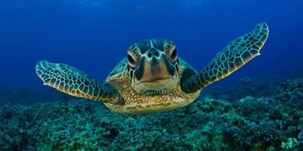 Teknős, akvárium matrica 60Sz x 30M cm