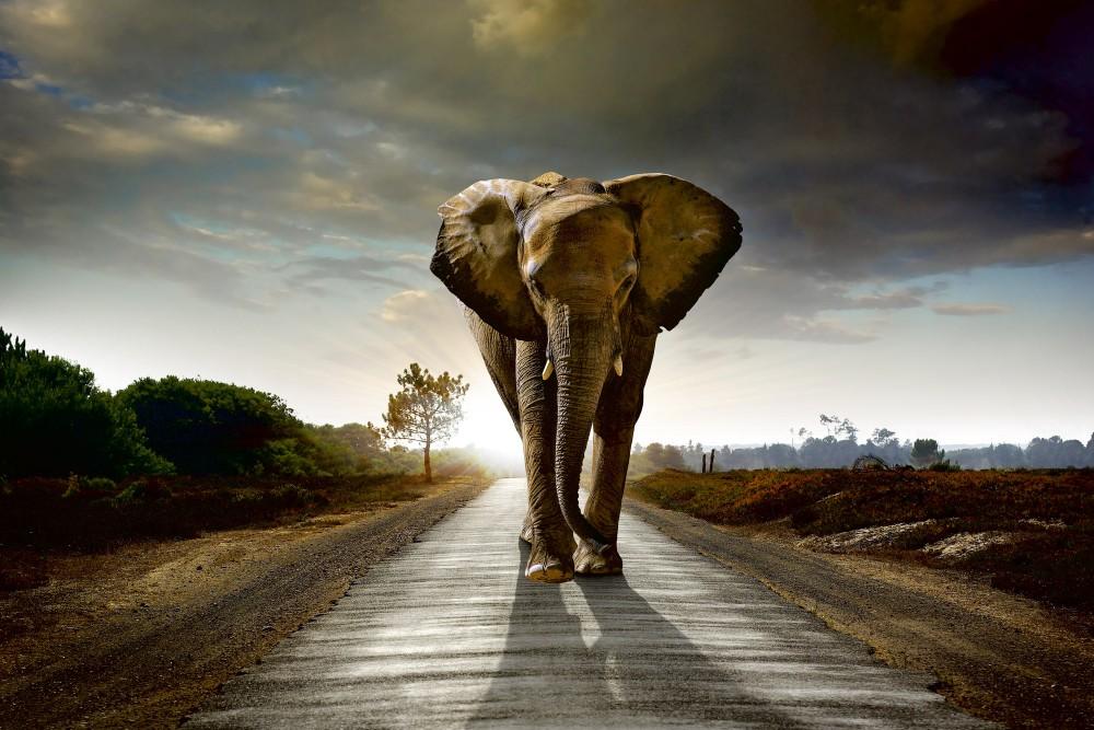 Elefánt az úton, poszter tapéta 375*250 cm