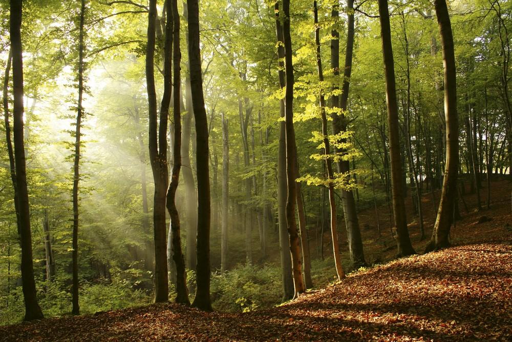 Napfényes erdő, poszter tapéta 375*250 cm